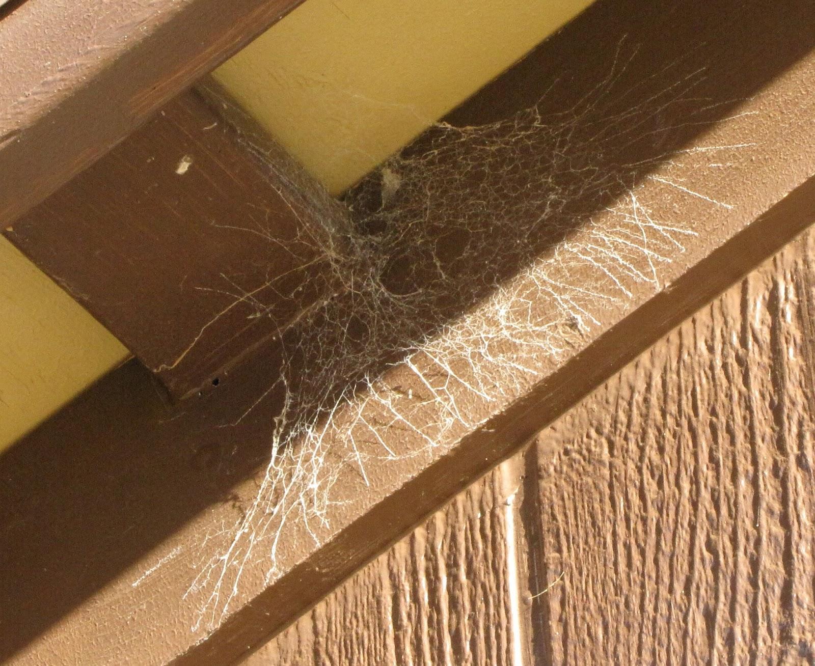spider pest control Albury